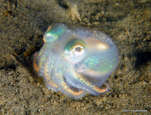 callmekitto:  ikedahirari:  cute guy  THIS OCTOPUS IS A MAGICAL GIRL