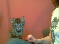 Meet Sydney, the adorable kitten from Sidcup. She's such a lovely cat, I could not be happier!