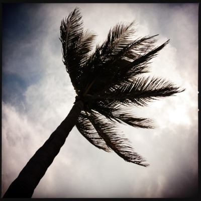 Palm at Hollywood Beach 1