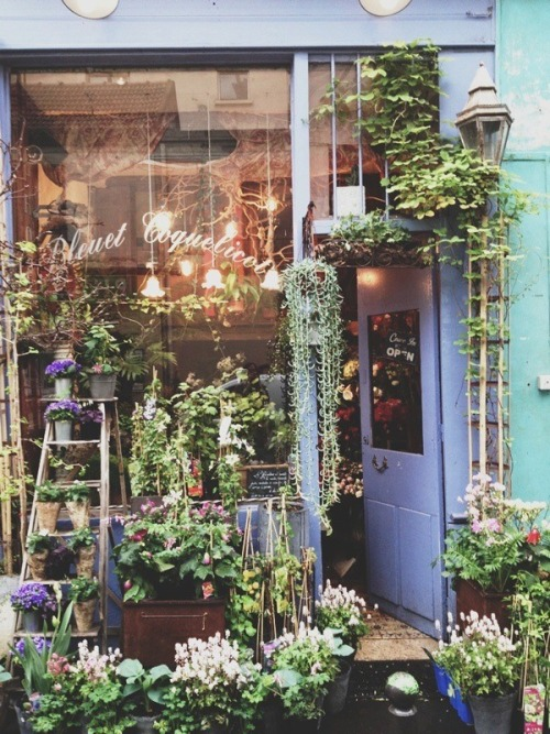 becomingroux:  Bleuet Coquelicot, Paris.