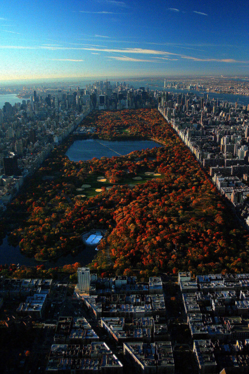 laragazzainvisibile81:  Autunno a New York, Central Park