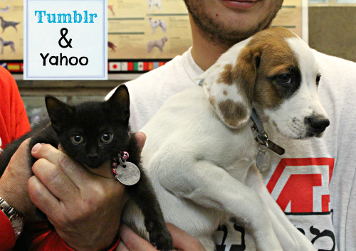 Tumblr the Kitten and Yahoo the Foxhound puppy are up for adoption today!