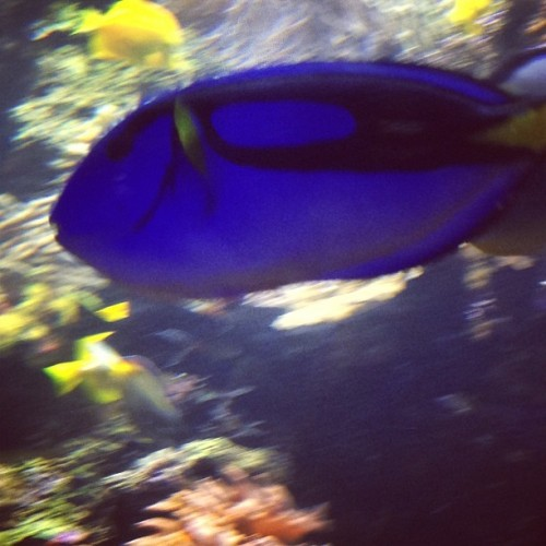 Dory! #nemo #fish #memories