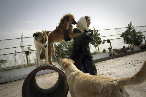 "animalcruelty-notok:  Man's best friend is not welcome in Iran Lawmakers in Iran are trying to ban the public appearance of dogs. The conservative-dominated Parliament is pushing this due to dogs' ""uncleanness"" and the desire to combat ""a blind imitation of vulgar Western culture."" Under this proposed bill, dog owners will be fined $500 and the dogs will be taken away by the police. However, the dogs are already being taken away from their families. What happens next to the dogs is unclear. Here's a petition on Avaaz aimed at UN Iranian Ambassador Mohamed Kazahee."
