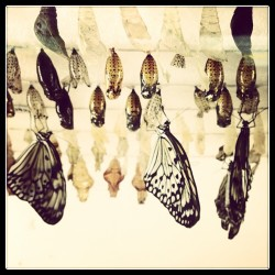 Metamorphosis. #butterflies