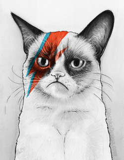 OMG! We didn't think Grumpy Cat could get any cooler!  eatsleepdraw:  David NOie-Grumpy Bowie Print | Shirt | Pillow | Tard Simmons