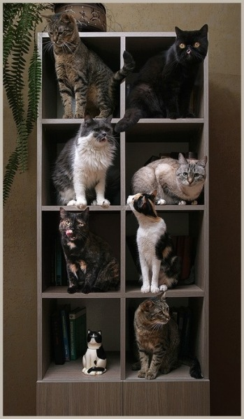 purrfectstitchers:  Cat Display Shelf