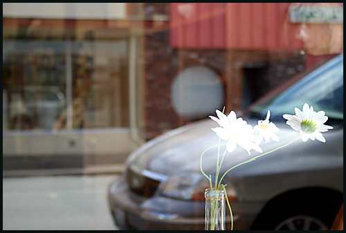 Plastic Daisies Storefront window reflection Photography by Harry Snowden