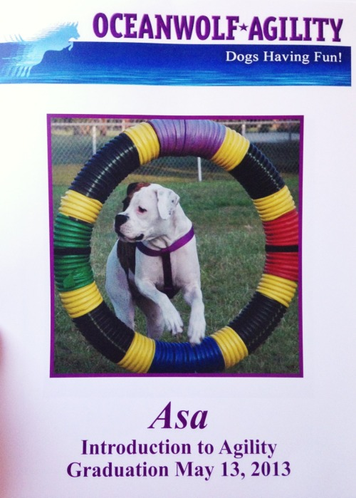 I am one proud chica! Graduated my first agility class tonight with flying colors! :)