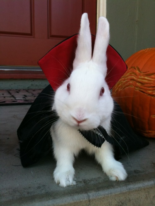 bunnylucius:  The one that started it all.