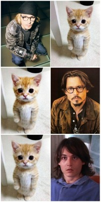 johnny-derpp:  johnny-madness:  lovingjdepp:  Is it just me or Johnny really look like cat ?  he always looks like cat ))) especially with mustache  omg, that's so lovely. im crying…