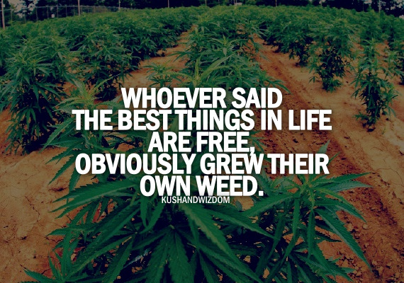 incredible-kush:  westcoaststoner420:  true that  But growing weed isn't free