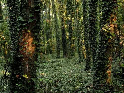 Ivy Forest, Tata, Hungary photo via wunderground