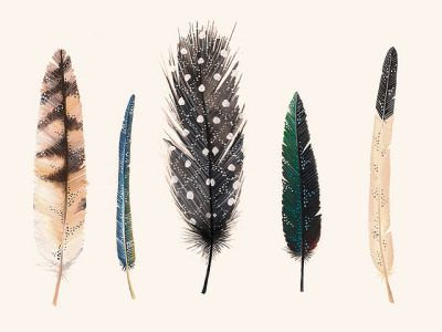 gildings:  Feathers 2 by anavictoriana on Flickr.