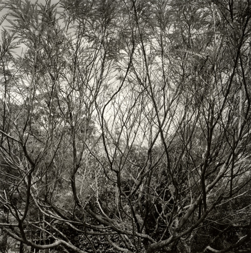 Northbridge Landscape I (2012), silver gelatin photograph.  http://james-morris.info/blog/2013/03/21/northbridge-landscape-i-2012/