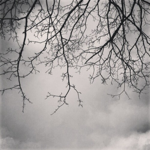 Emmm.. formerly blue skies, #lastofwinter #dried #branches #blackandwhite #random #tree #darkskies #manmade #overcast #sky #creepy