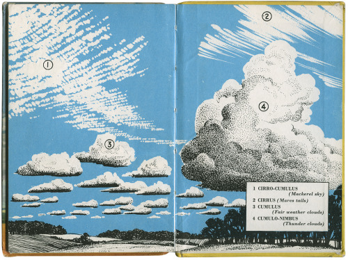 neoncrayon:  hyleem: the weather - a ladybird book (via maraid)
