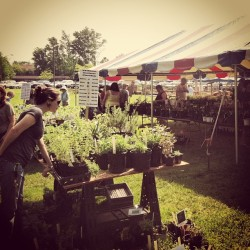At the Master Gardener's Plant Sale at The Virginia Beach Farmers Market #hrva #gardening #plants #spring #picoftheday
