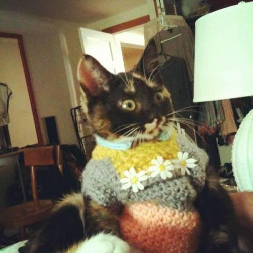 "Sweater Kitteh says: ""I am so going to puke in your shoe later!"""