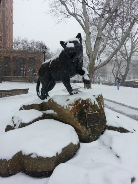 hail-to-pitt:  via The Oakland Zoo