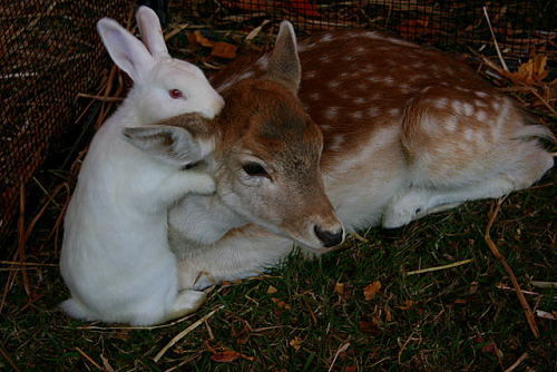 fairycemetery:  quiet-nymph:  Deer & Bunny lovebyX POSE  ❤