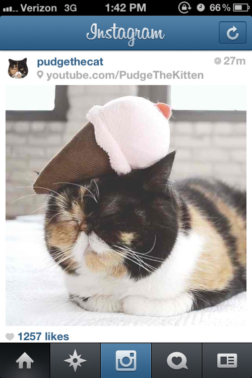 Everytime Pudge shows up on my IG feed, I want to cry because she doesn't belong to me.
