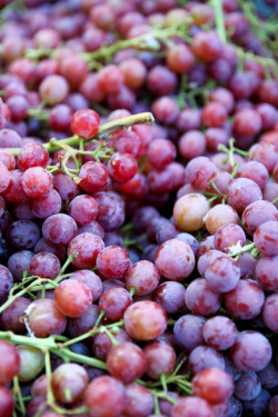 acidus:  nosens:  Grapes (by theqspeaks)   This speaks to me on an emotional level