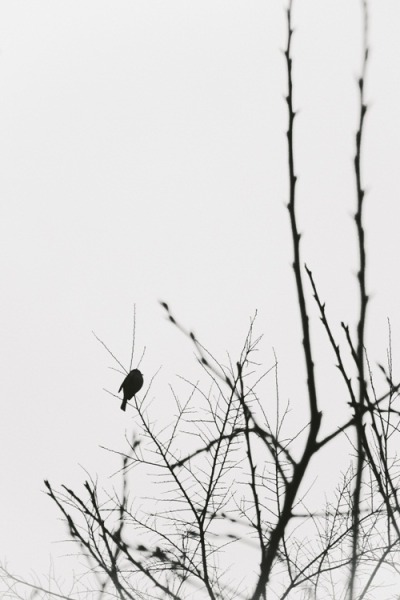 lensblr-network:  lonely bird by keren-s.tumblr.com
