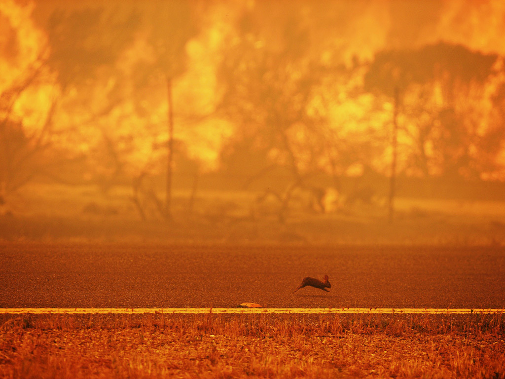 ecocides:  A rabbit runs from a wildfire burning along the Pacific coast highway | image by Robyn Beck