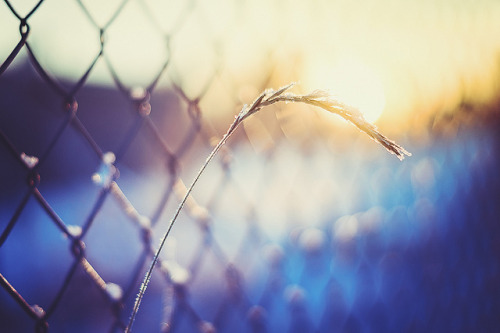 Happy Sunny Day Fence Friday by jennydasdesign on Flickr.