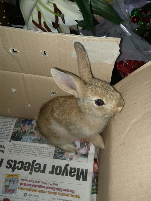 new baby rabbit