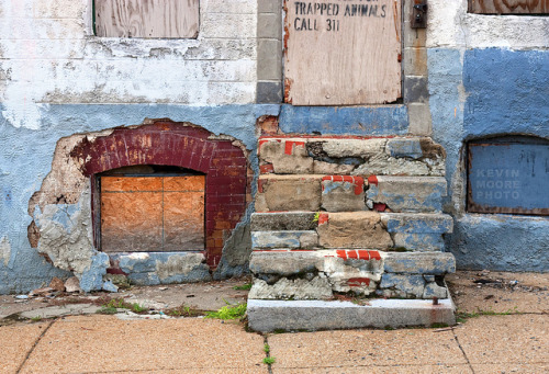 Steps - Baltimore on Flickr.Trapped Animals Call 311