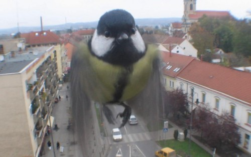 headandstomachached:  This cute little bird was photographed by a web cam in Hungary. The web cam only takes one photograph per minute, so this guy must have really wanted to say hi to everyone around the world.