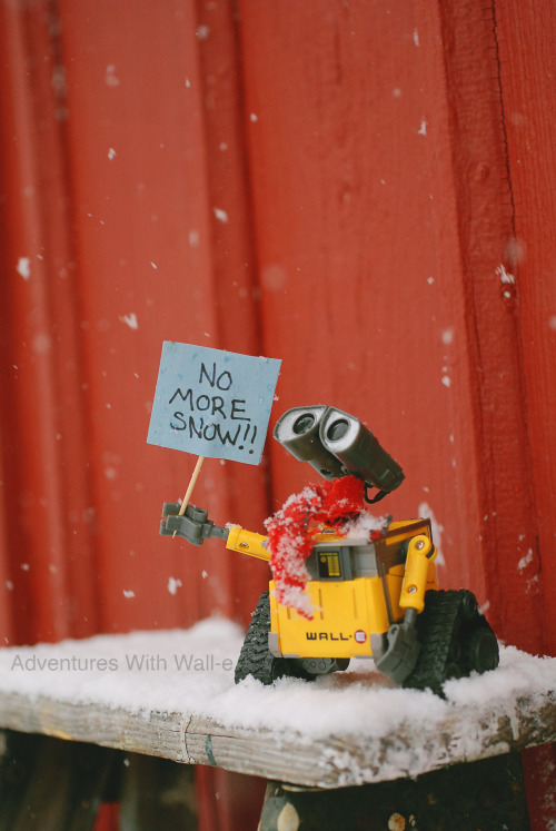 Wall-e is ready for spring.
