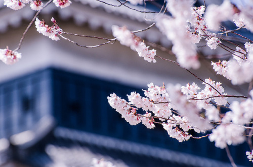 nihon-daisuki:  Sticking Out by lestaylorphoto on Flickr.