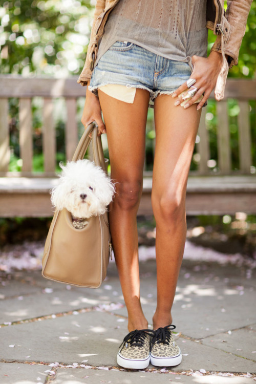 thenycstreets:  A model, dog, and Celine. Everything I love in a single photo. Please check out my model style post with Anais Mali at DNA on models.com  Adorbz