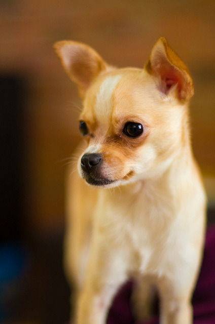 A Puppy ! ! ! by Ennev on Flickr.