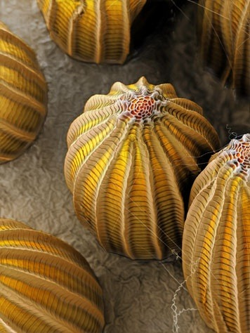 somuchscience:  creepycrawlieslove:  Butterfly Eggs  or the eggs of the creatures from Alien??? EGADS!