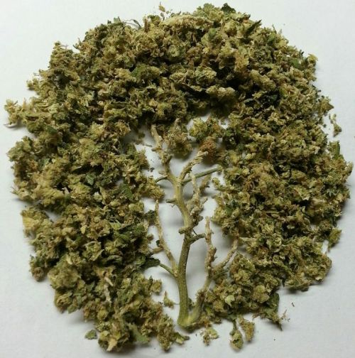 youknowyourestoned:  tree of life