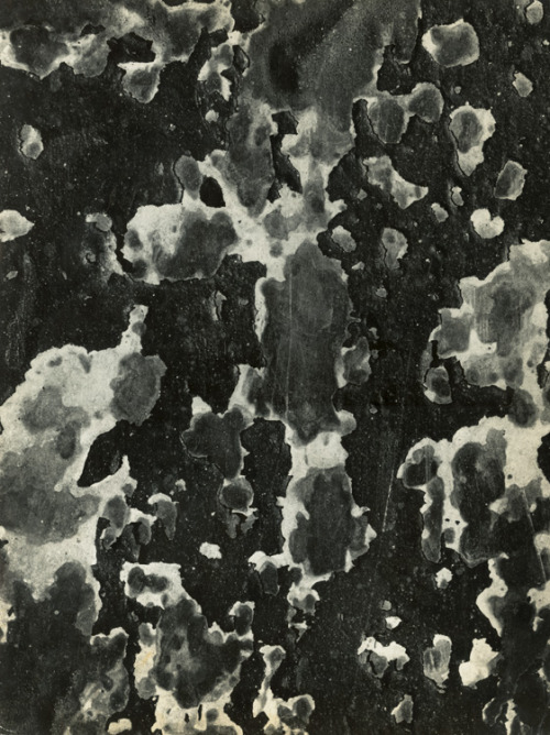 3rdorgan:  Aaron Siskind - Untitled Abstraction http://www.iphotocentral.com/showcase/showcase_view.php/24/0/40/1/3/0