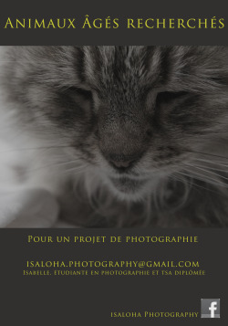 Please contact me if you have an old animal and if you can travel to Montreal with your animal for a photoshoot ! In exchange you get a big print and a digital version of the picture. Send me an email, with a picture of your animal. Thank you very much !