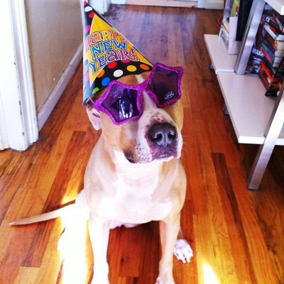 ellethedog:  HAPPY NEW YEAR! I've been partying since the sun was up. How about you? #stuffonelleshead
