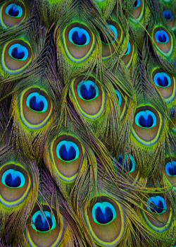 animals uploads colors nature feathers fã vertical