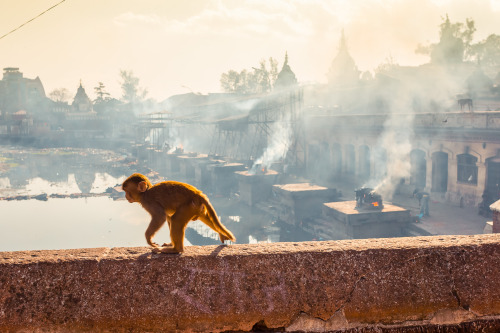 rucksackandacamera:   Baby monkey in front of a cremation site along Bagmati river in Pashupatinath Temple, Kathmandu, Nepal.