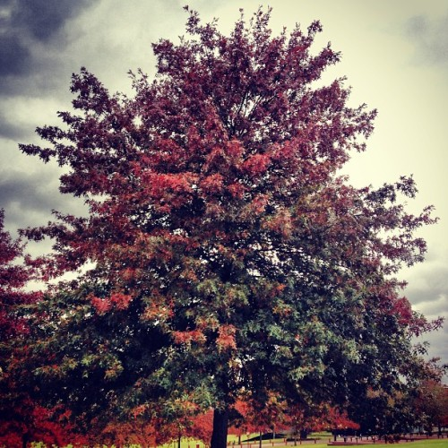 The tall trees #autumn #green #red #colour