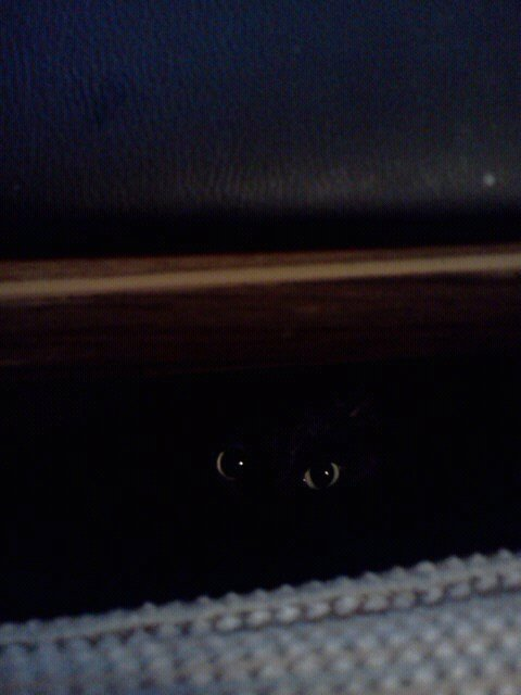 My cat has never creeped me out as much as he did here. He found the perfect lighting.
