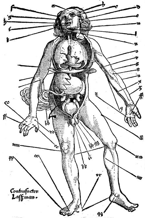 vulturehooligan:   Hans von Gersdorff, Points for bloodletting, 1517.