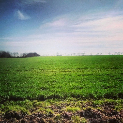 Fields upon fields in Fannin County. #Field #tree #line #grass #green #farmer #hogs #county #roads #back #roads #Texas