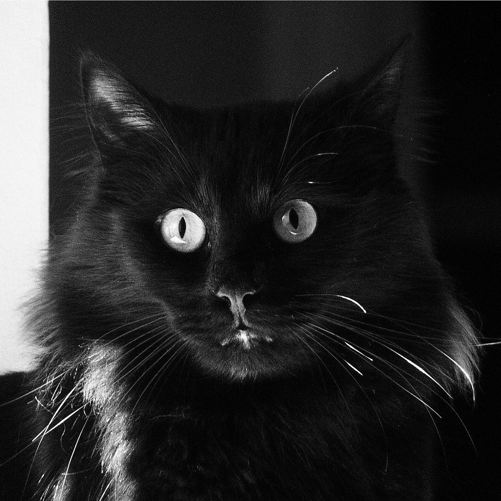Bad luck is not having a Black Cat. Photo by ©Rainy Monday