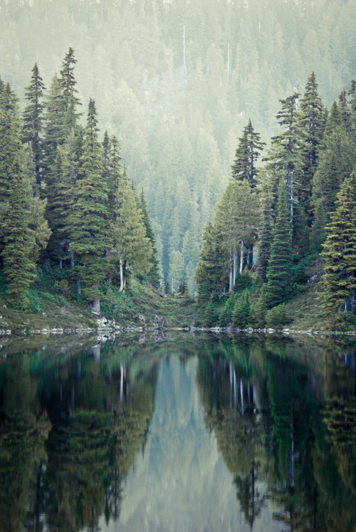 trulyperf:  Green Trees (by photosbysomeguy)